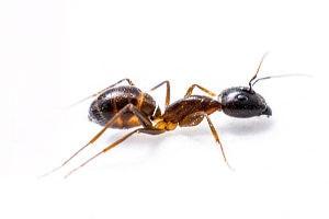 Mieren bestrijding
