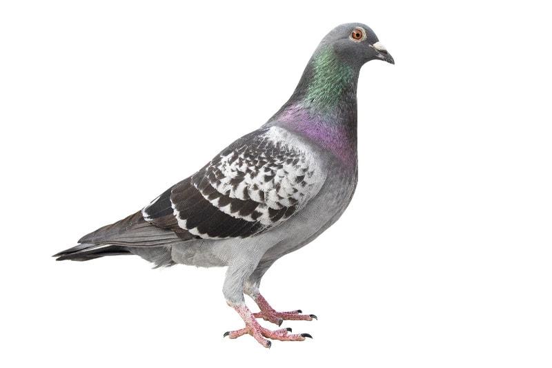 Vogelwering zakelijk